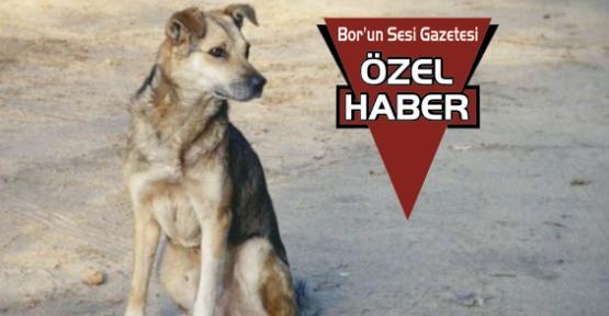 Bor'da Sokak Köpekleri Tehlike Saçıyor