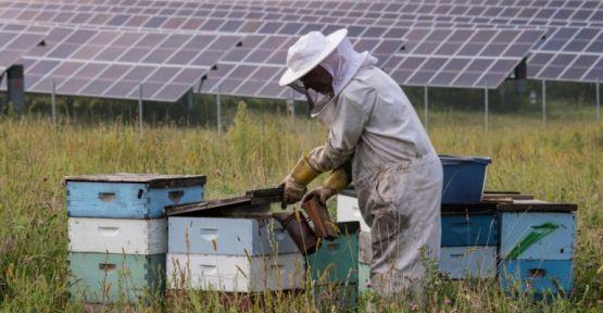 Çamardı İlçesinde Bal Üreticisine Kop Enerjisi Projesi