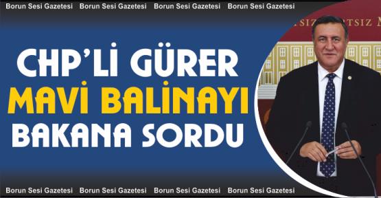 """CHP'li Gürer, """"Mavi Balina'yı  Bakana sordu"""