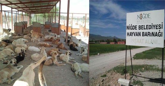 Coronavirüsüne Karşı Hayvan Barınağı Ziyaretlere Kapatıldı