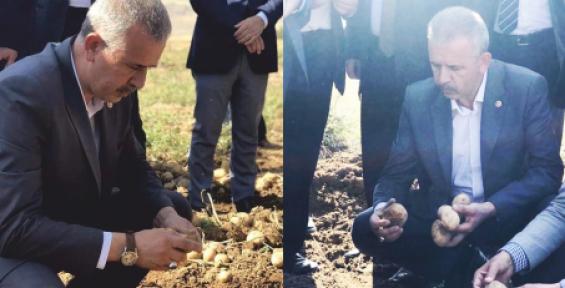 Milletvekili Ergun; Patates Üreticilerimize Can Suyu Olacak