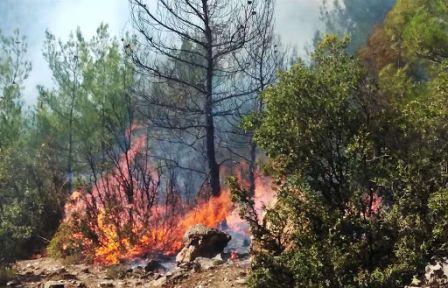 Orman Yangını Korkuttu!