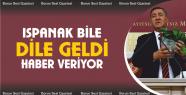 Gürer, 'Ispanak bile dile geldi, haber...