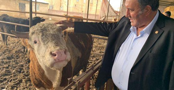"""""""Yem fiyatlarındaki artış hayvancılığı tehdit ediyor"""""""
